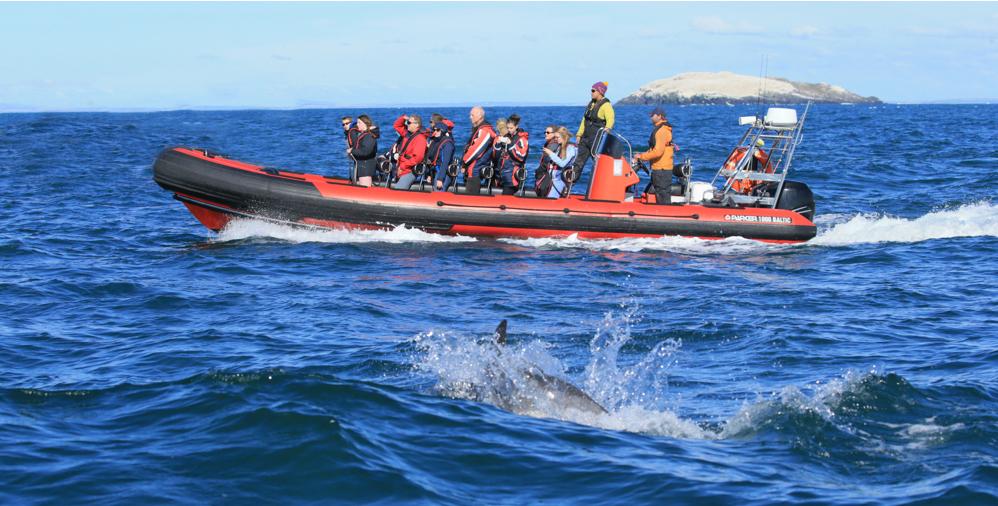 oceanraven-blue-ocean-boat-trips